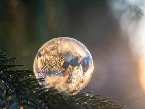 frozen bubble on pine tree