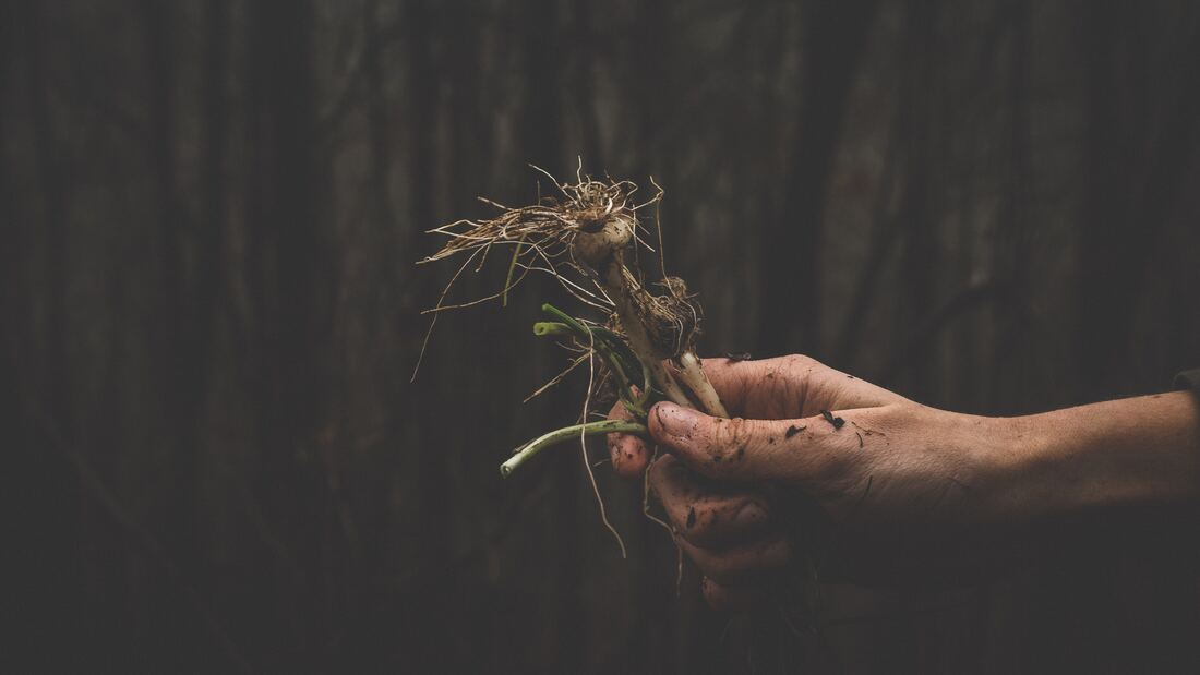 Man holding plant by its roots