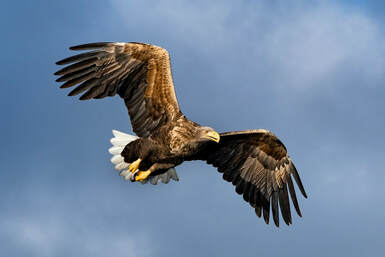 Eagle with outstretched wings, name of support group.