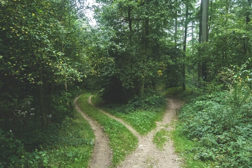 Paths diverging in green woodland, illustrating the truth that we were made for fellowship.