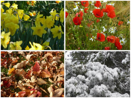 Composite picture of daffodils, poppies, fallen leaves & snowy branches, illustrating the page title of 'Seasonal Living'.