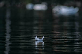 Small white feather, floating on a pond, illustrating the page theme of 'sacred silence'.